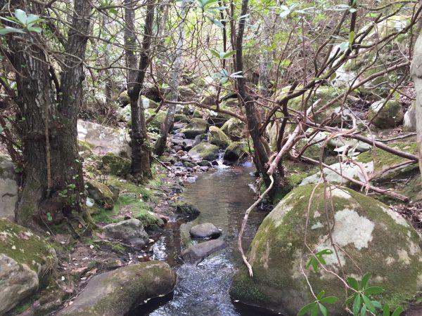 sendero río Guadalmesí