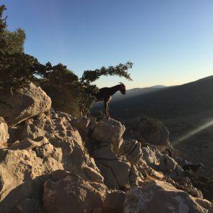 Pico Navazo Alto