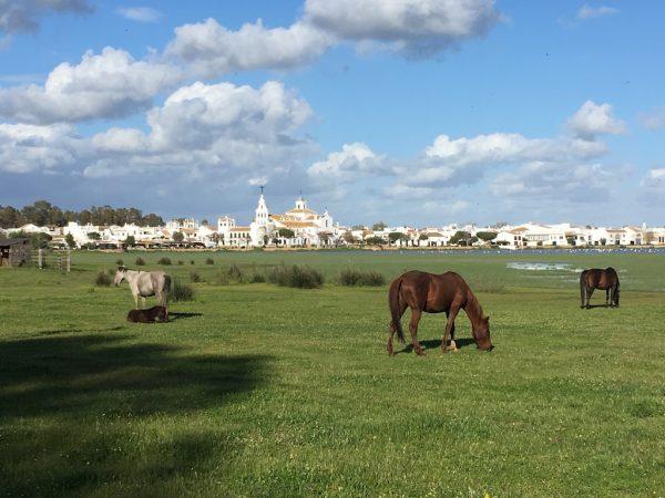 Visita a las Marismas de Doñana