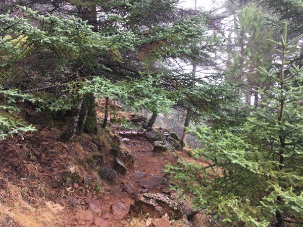 Pinsapar de Sierra Bermeja